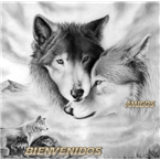 Lobo Amanecer Mx Mexico